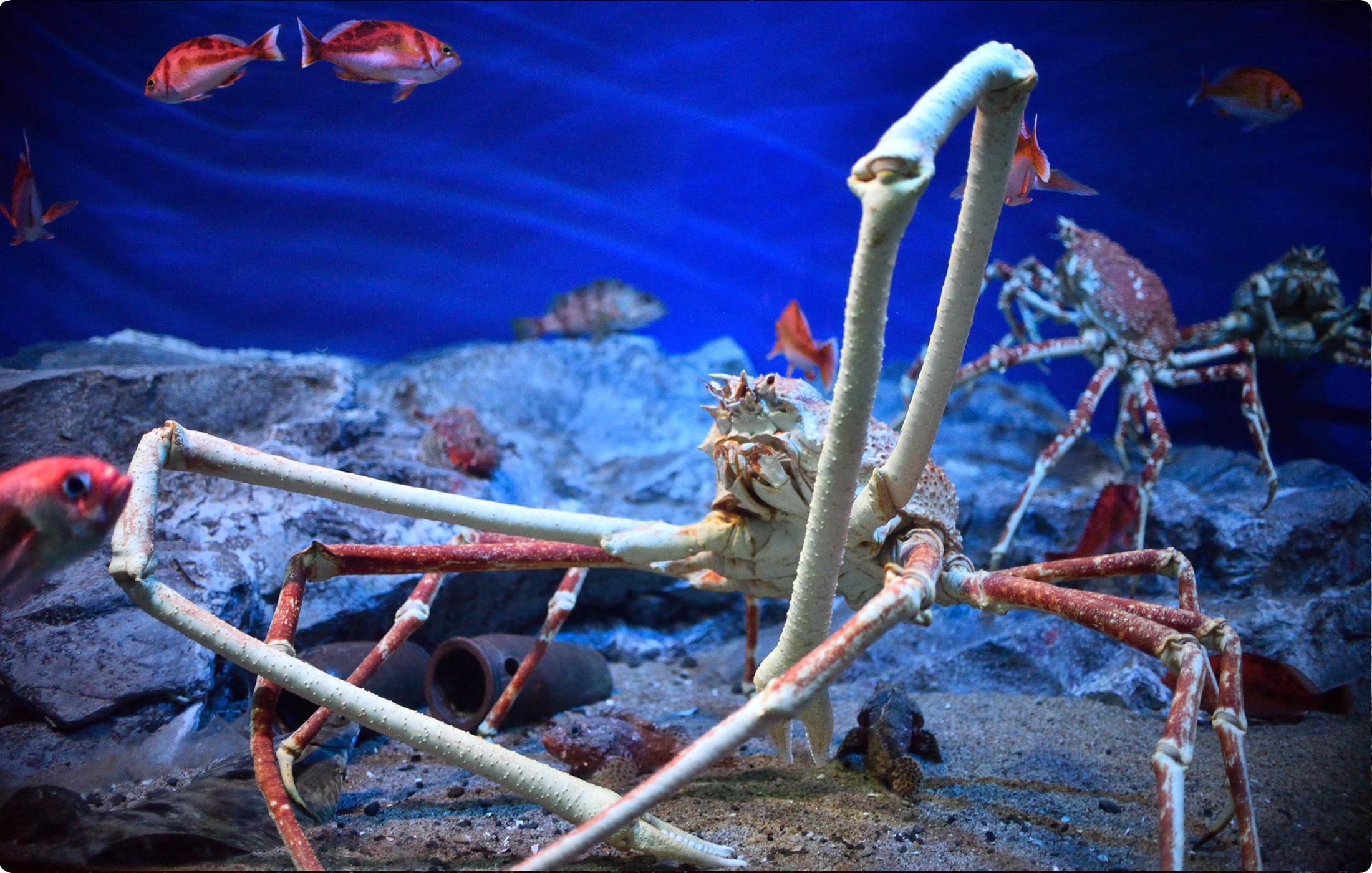 深海ギャラリー