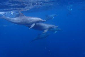日比野トレーナーが撮影したイルカの写真
