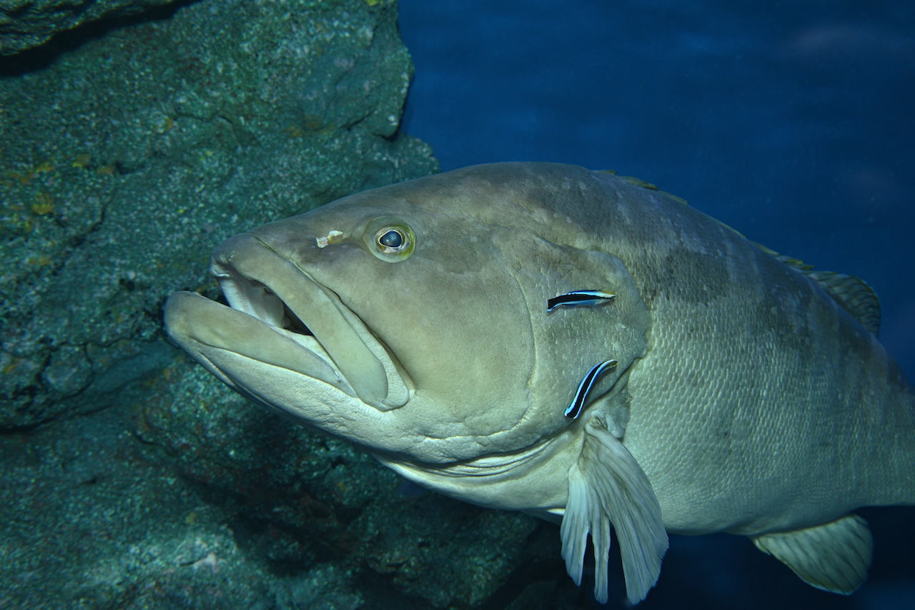 名古屋港水族館公式ホームページの「海の仲間たち」ページです。